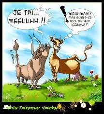 Blague animaux