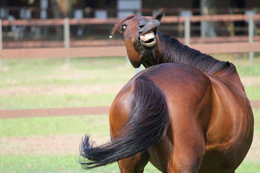 Funny animals of the week - 28 March 2014 (40 pics), funny horse