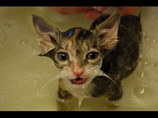 funny cat in water compilation