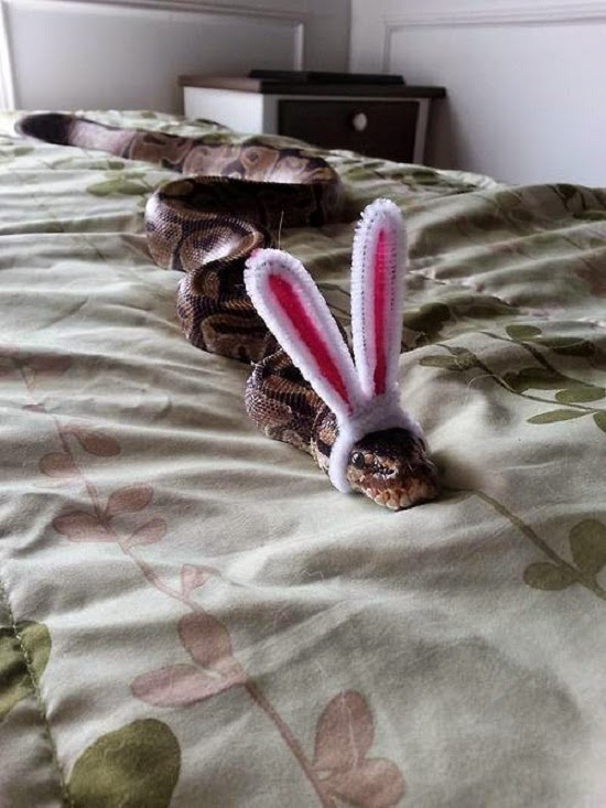 No se que tiene mi conejo