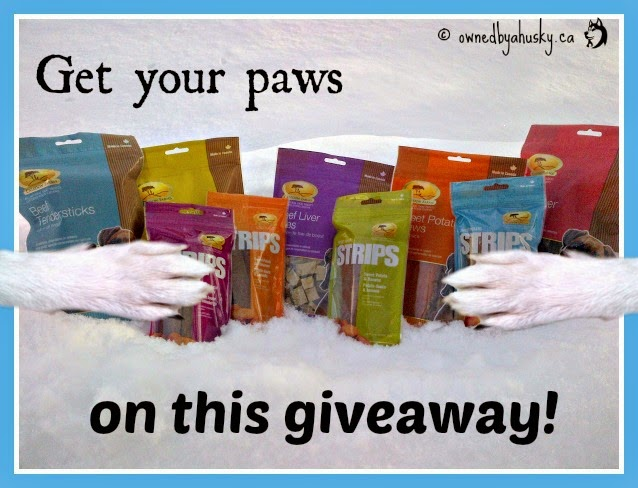 dog treat giveaway