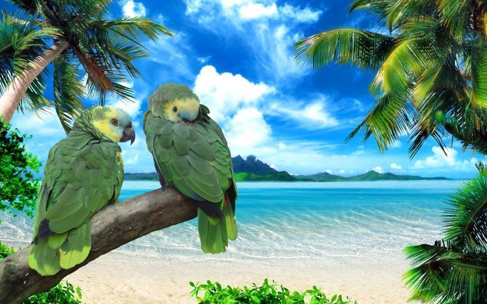 Zielone papużki