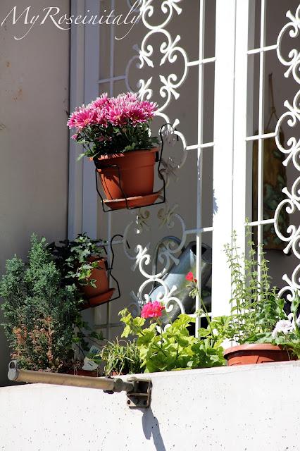 My roseinitaly piante aromatiche e fiori for Vasi appesi
