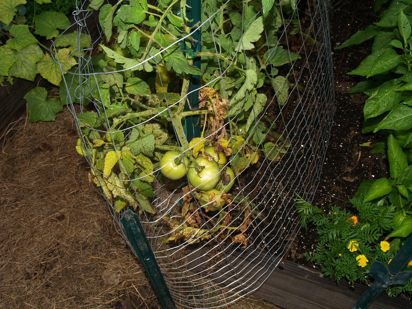 gardening in winter garden: attack of the rats
