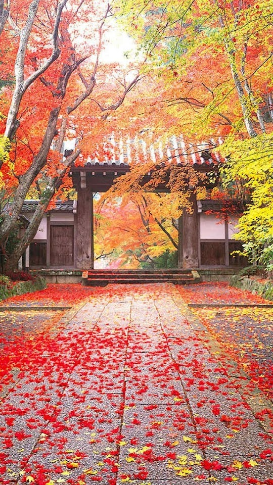 Maple Leaves and Chinese Style Ancient Architecture   Galaxy Note HD Wallpaper