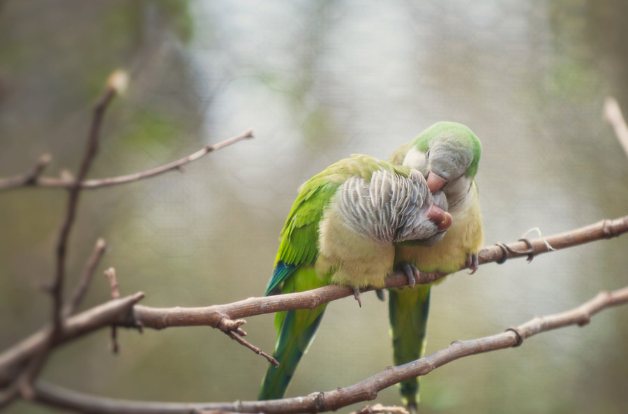 40 Beautiful love birds wallpapers Inspire Information