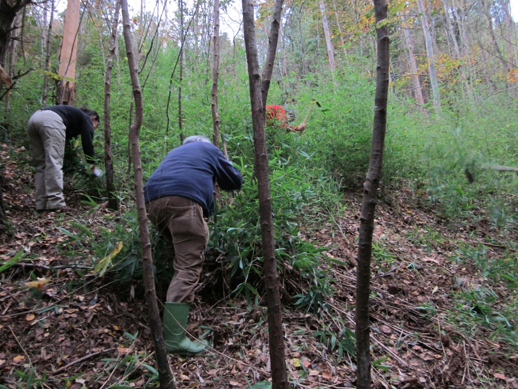 Fundaci n lurgaia fundazioa un nuevo ataque al bamb - Reproduccion del bambu ...