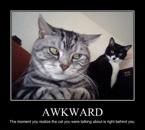 Awkward - The Moment You Realize The Cat You Were Talking About Is Right Behind You