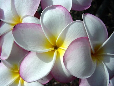 Elegant Hawaiian Flowers