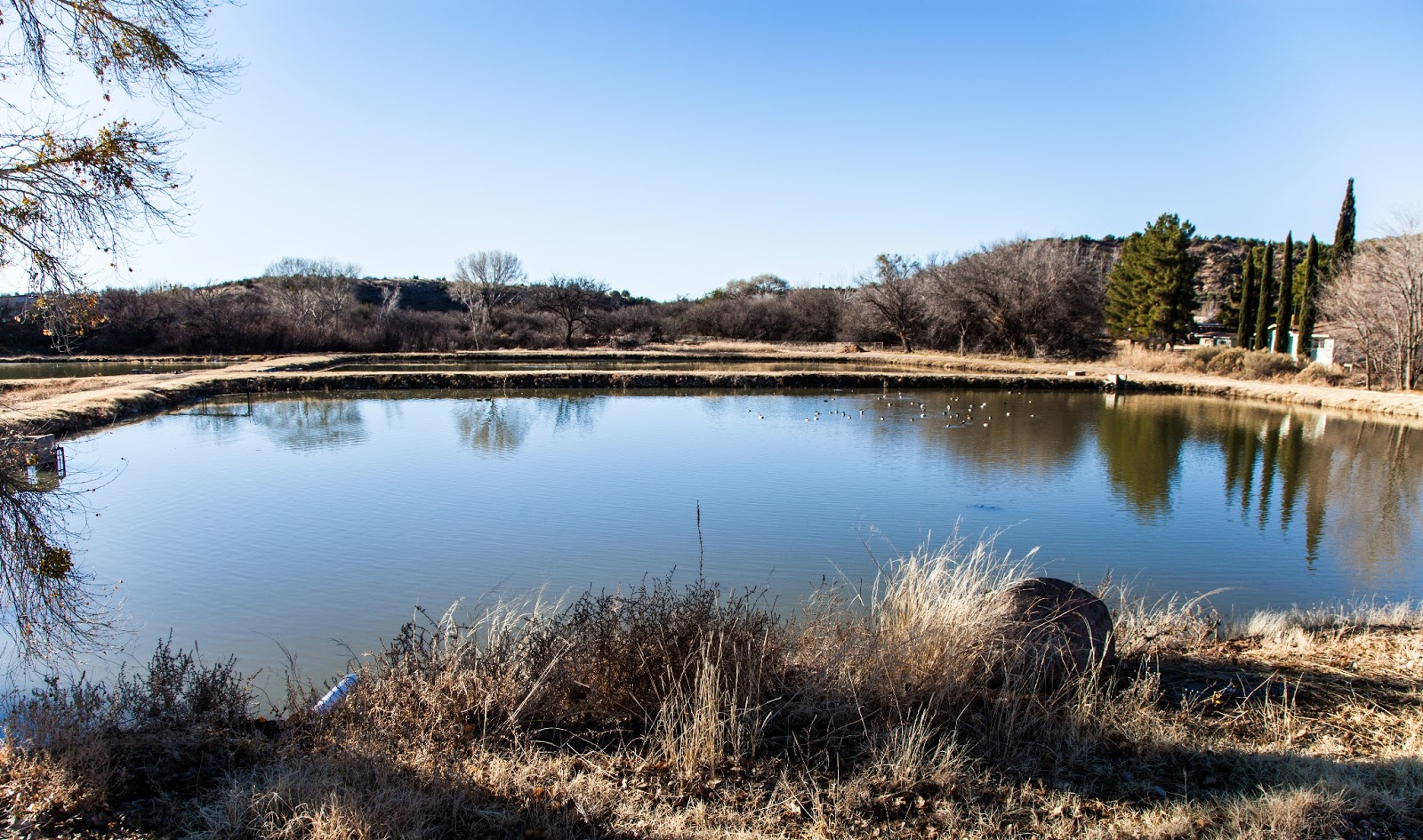 Bubbling ponds fish hatchery walking arizona for Az pond and pool