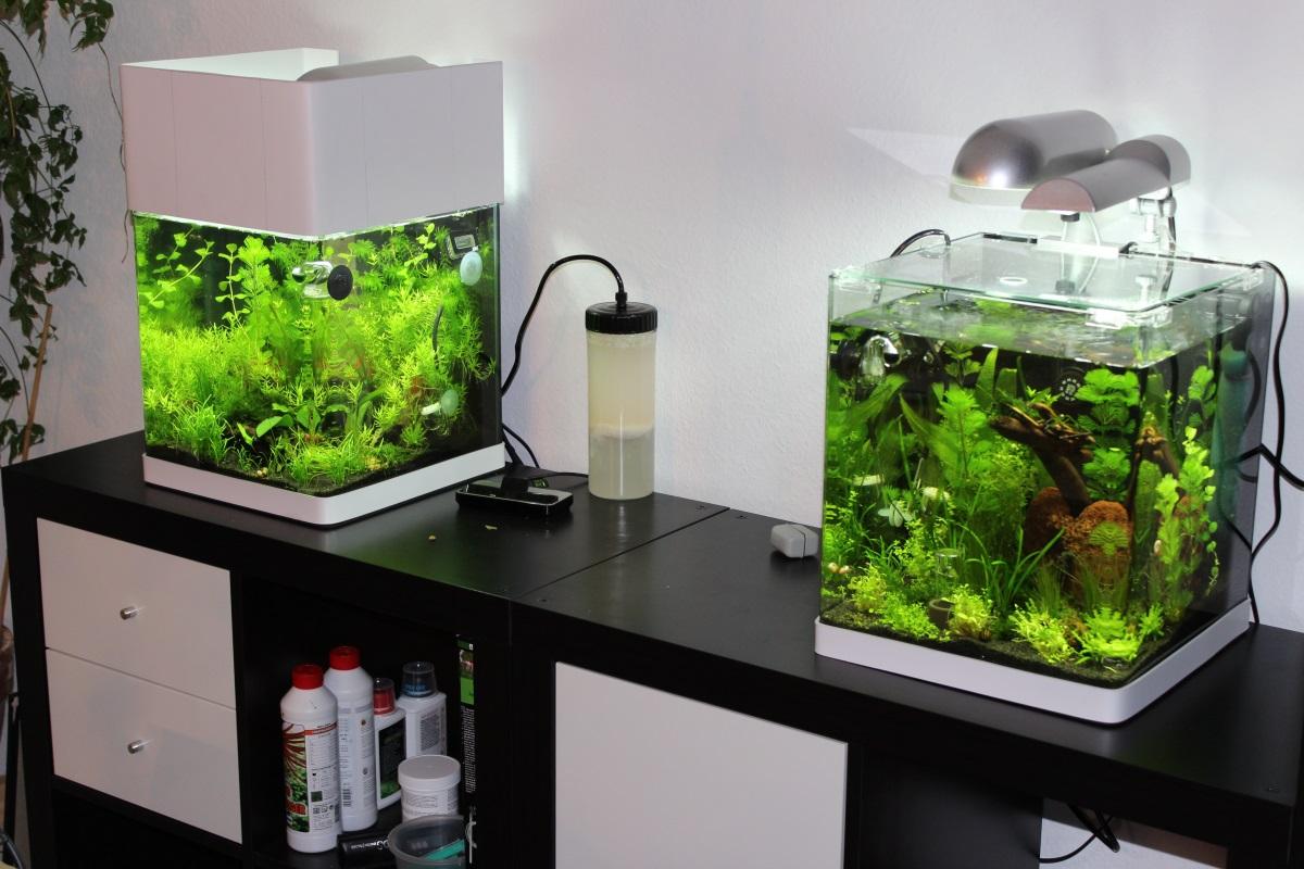 tetra 211957 aquaart shrimps aquarium komplett set 20 l ideal f r die haltung und zucht von. Black Bedroom Furniture Sets. Home Design Ideas