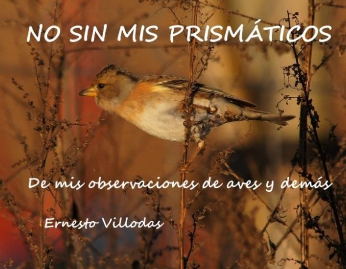 NO SIN MIS PRISMÁTICOS