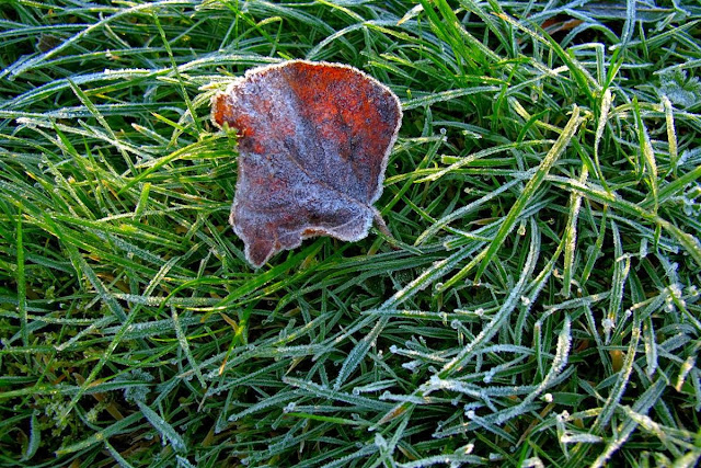 © Annie Japaud PHOTOGRAPHY 2013, FIRST FROST