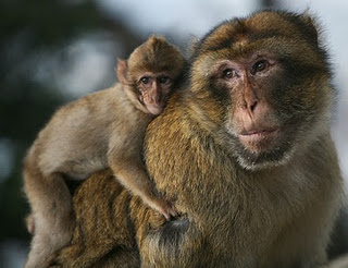 Cute Monkeys pictures