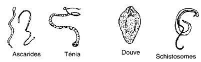 Les comprimés chinois des parasites albendazole