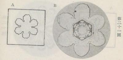『雪華図説』の研究 模写図と顕微鏡写真と比較 第二十一図