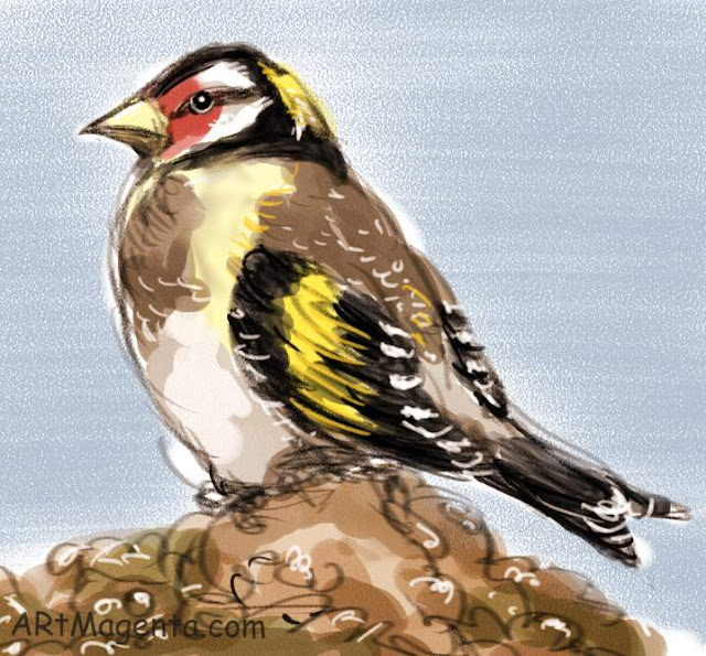 Goldfinch, a bird sketch by Artmagenta