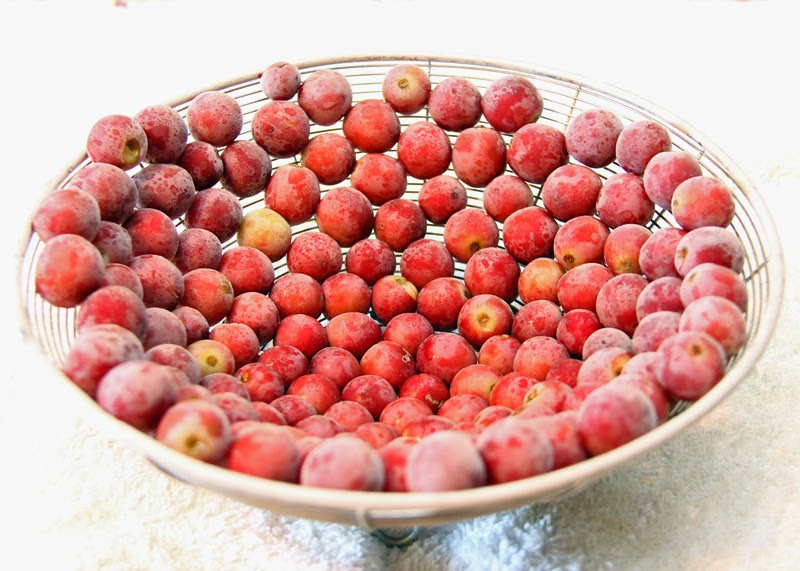 Freezing grapes in a colander.
