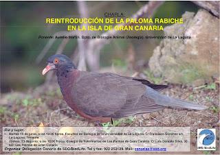 avafes canarias seo birdlife charla reintroducci n de la paloma rabiche en gran canaria. Black Bedroom Furniture Sets. Home Design Ideas