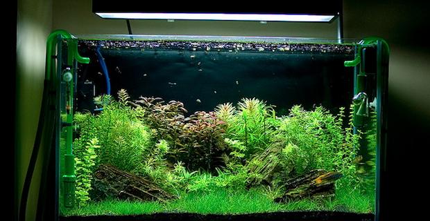 Фильтр для аквариума картинки