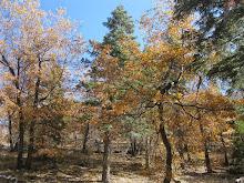Fall Foliage near Jenks Lake