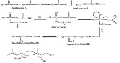 uji fitokimia steroid dan terpenoid