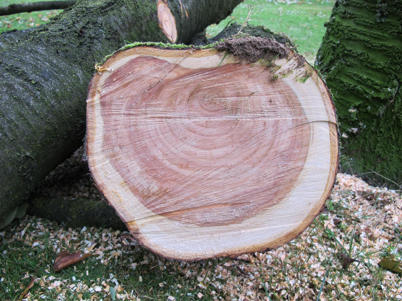 Bomensnoei in het najaar kijk meteen hoe oud de boom is - Hoe een boom te verlichten ...