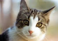 اكتشف أغرب 24 معلومة عن القطط..سبحان الله مدونة سامي سهيل