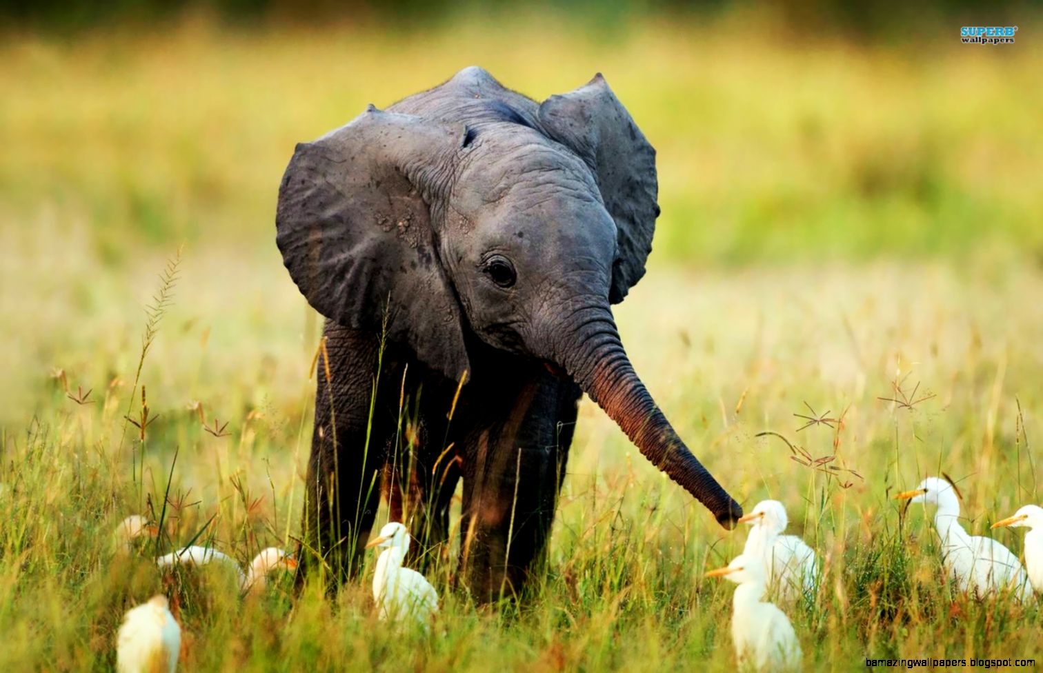 cute baby elephants amazing wallpapers. Black Bedroom Furniture Sets. Home Design Ideas