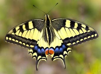 Pincha y descubre el mundo de los invertebrados