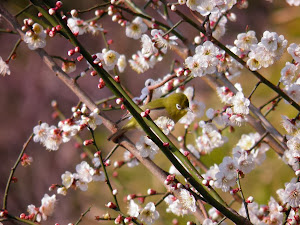 3月の田舎暮らし格安物件探しで見付けた花