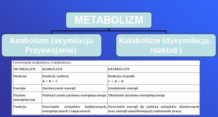 anaboliczna reakcja