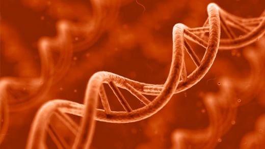 Científicos han revelado la manera cómo los pensamientos provocan cambios moleculares en tus genes