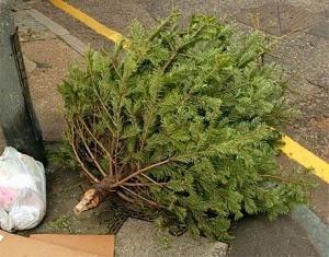 کشتار درختان برای گرامیداشت زادروز مسیح