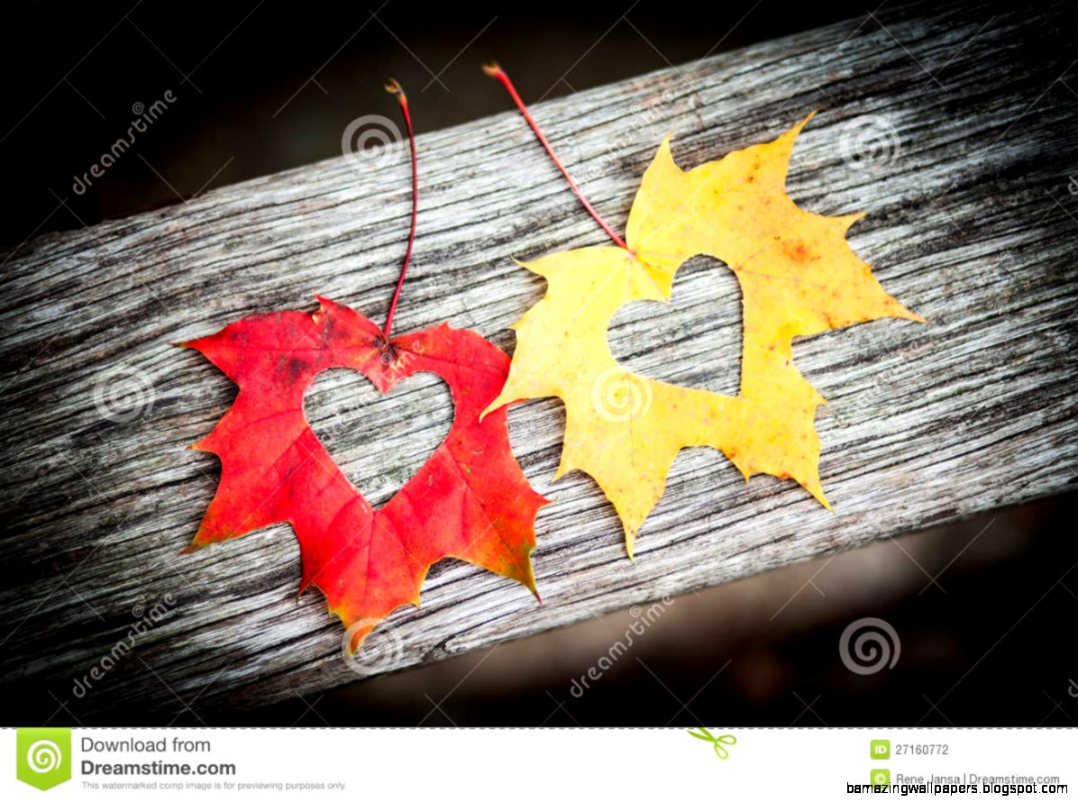 Autumn Leaves With Hearts Stock Photography   Image 27160772