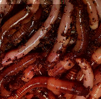 Earthworm Pastel Recipe