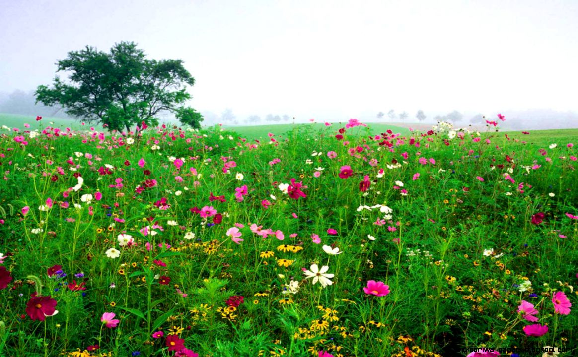 Field Of Colored Flowers Wallpaper Picture