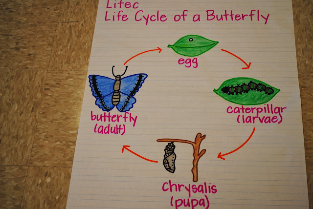 Image Result For Life Cycle Of A Chicken Magic School Bus