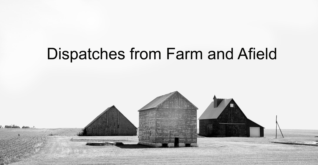 Dispatches from Farm and Afield
