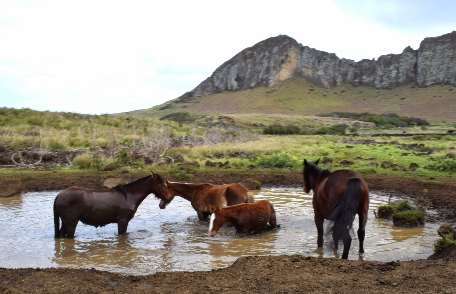 how to get to wild horse island