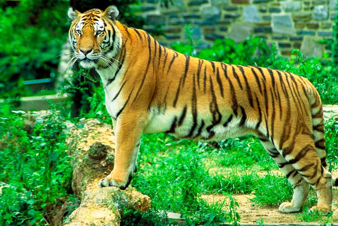 Los 10 Animales mas Fuertes del Mundo