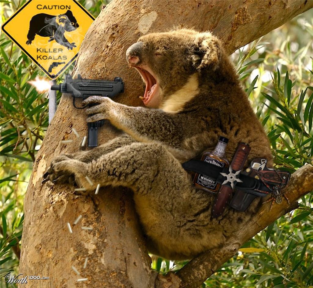 Koala tail - photo#14