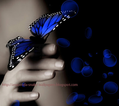 blue Butterfly on hand Wallpapers