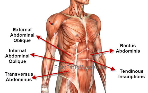 Core Muscles: Names Core Muscles