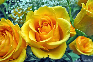 Yellow Love rose