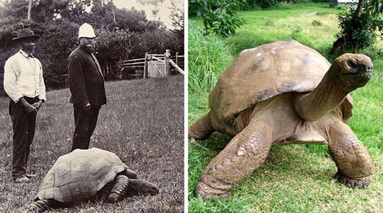 Jonathan la tortuga fotografiado en 1902 y hoy en día