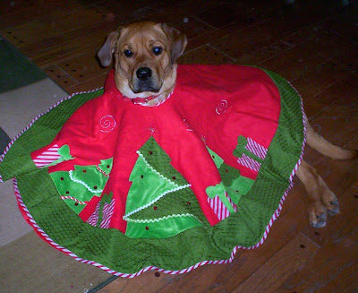 christmas tree skirt dog costume - turtlesandtails.blogspot.com