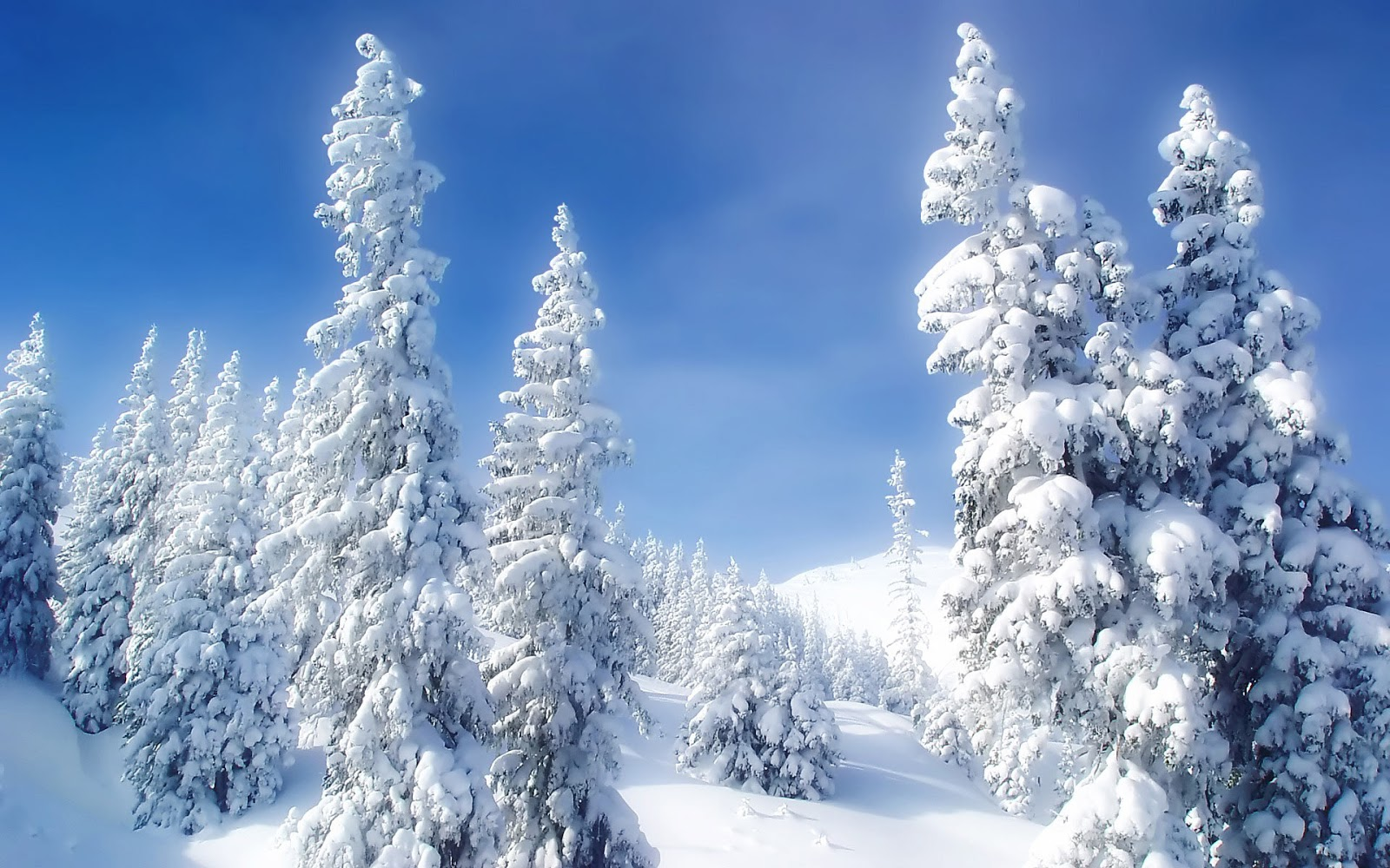 http://3.bp.blogspot.com/-ITTcqHgkZT0/UNWoCNeHNSI/AAAAAAAABb0/99tcGKOiweQ/s1600/mountain_snow_forest_trees_wallpaper-wide.jpg