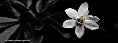 Couverture facebook timeline fleur noir et blanc