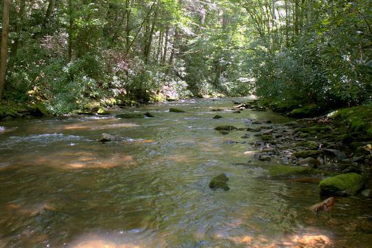 Cataloochee Creek in Cataloochee Valley